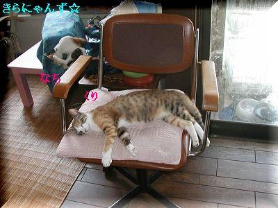 愛用の椅子・5