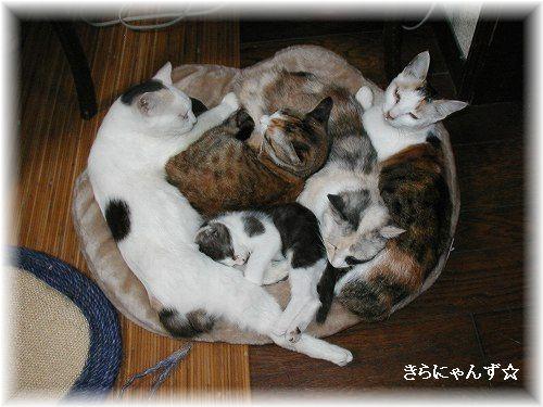 猫団子その1