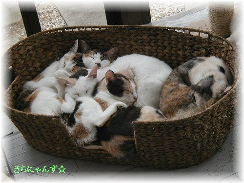 猫団子その2