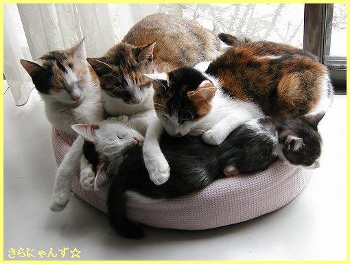 猫団子その3