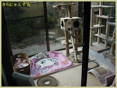 猫部屋大掃除・1