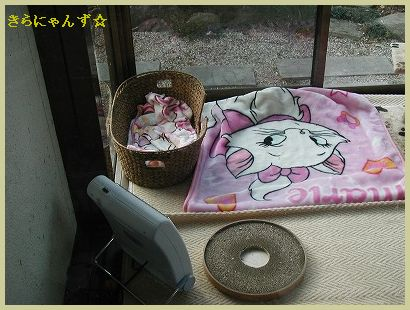 猫部屋大掃除・2