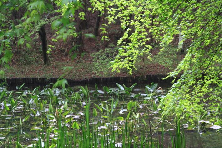 自然の森_0027