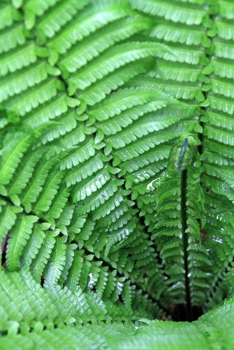 自然の森0021