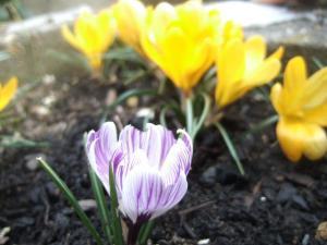 2008-03-08_13.jpg
