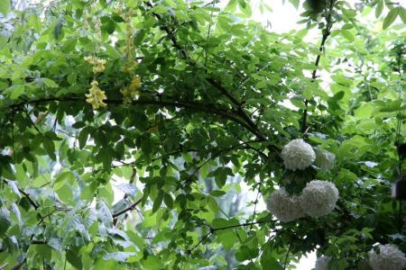 2011-05-11_08.jpg