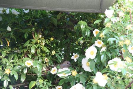 2011-05-14_64.jpg