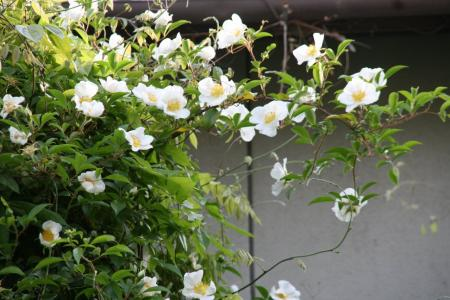 2011-05-15_23.jpg
