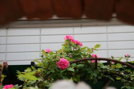 2011-05-19_67.jpg