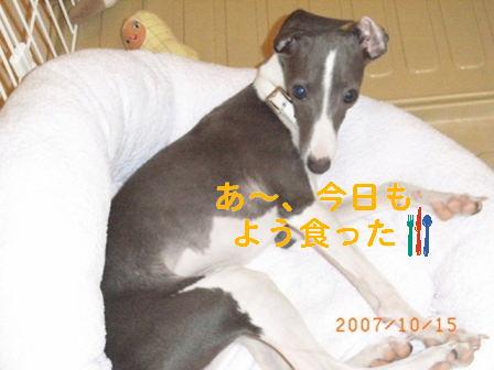 RIMG0115.jpg