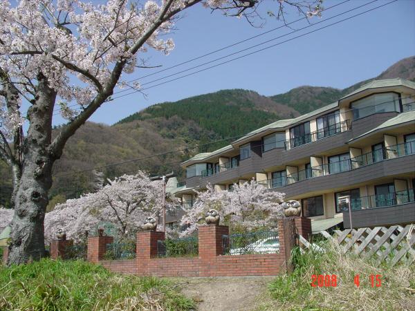 海津大崎の桜だそうな03