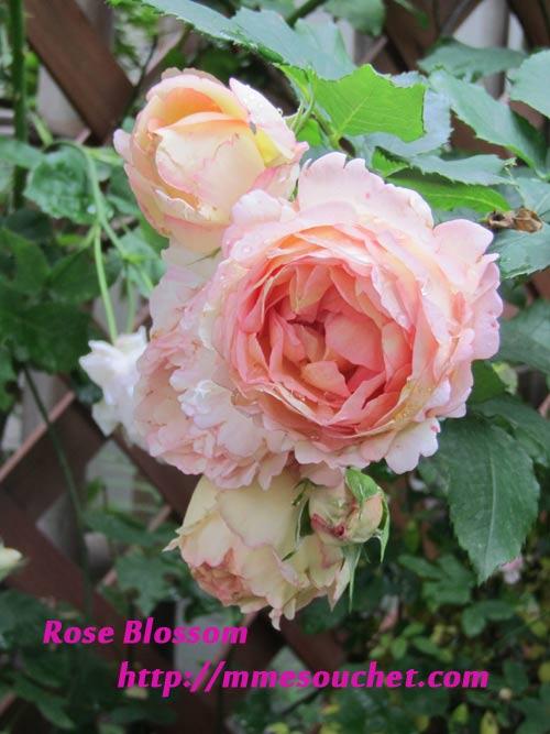 bonbon20110527.jpg