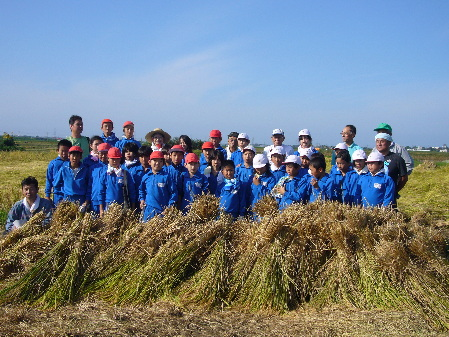 2009 小学校稲刈り