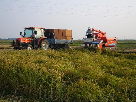 2009年 稲刈り