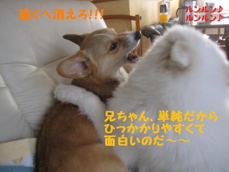 2009 9 17 dog1