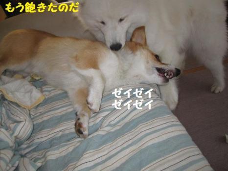 2009 9 17 dog2