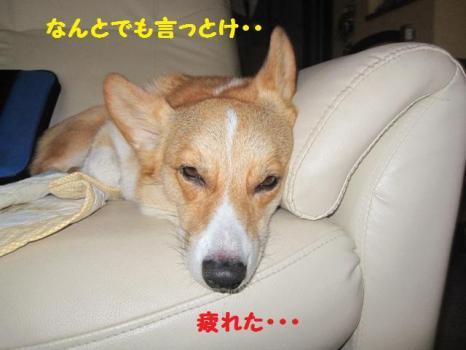 2009 9 17 dog4