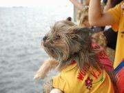 愛犬と乗船できるレストラン船-ロイヤルウイングが定期運行へ
