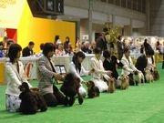 パシフィコ横浜で初の「ドッグフェスティバル」-犬3千匹が登場