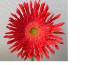 ga-bera1_convert_20110618145422.jpg