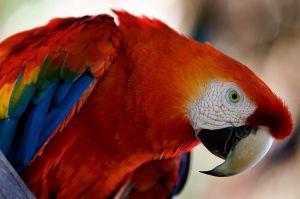 https://blog-imgs-12-origin.fc2.com/k/o/s/kosstyle/773564_araras_vermelhas_-_red_brazilian_macaws_3.jpg