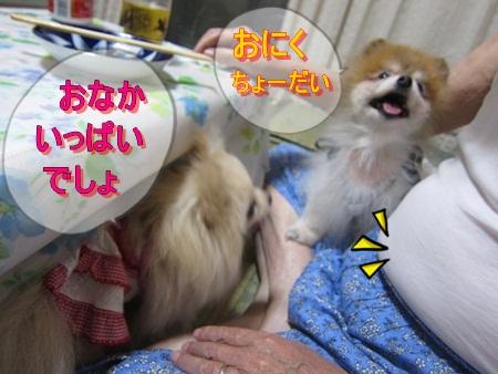 IMG_1524-s.jpg