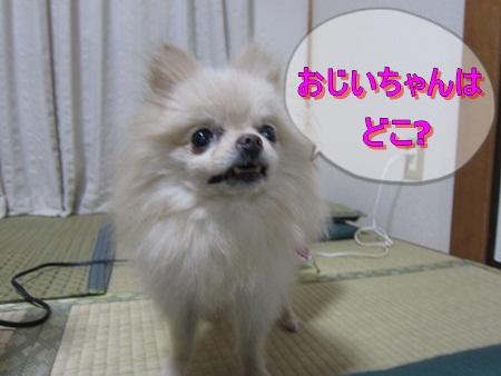 IMG_1591-s.jpg