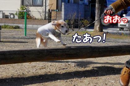 ジャンプ 5 たあっ!