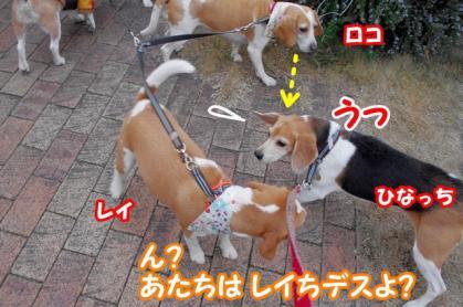 突撃 13 レイちん振り向いちゃダメ!