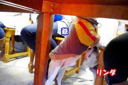 カフェ 2 テーブルの下から