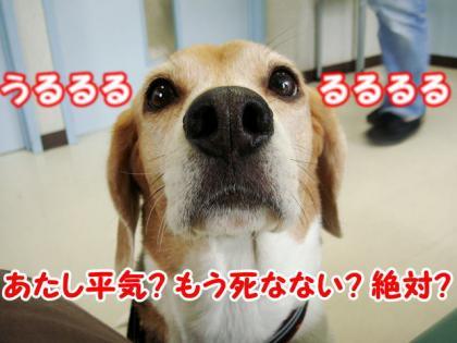 ワクチン 3
