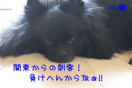熊熊人日記0203-3のコピー