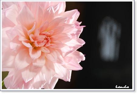 大好きなお花