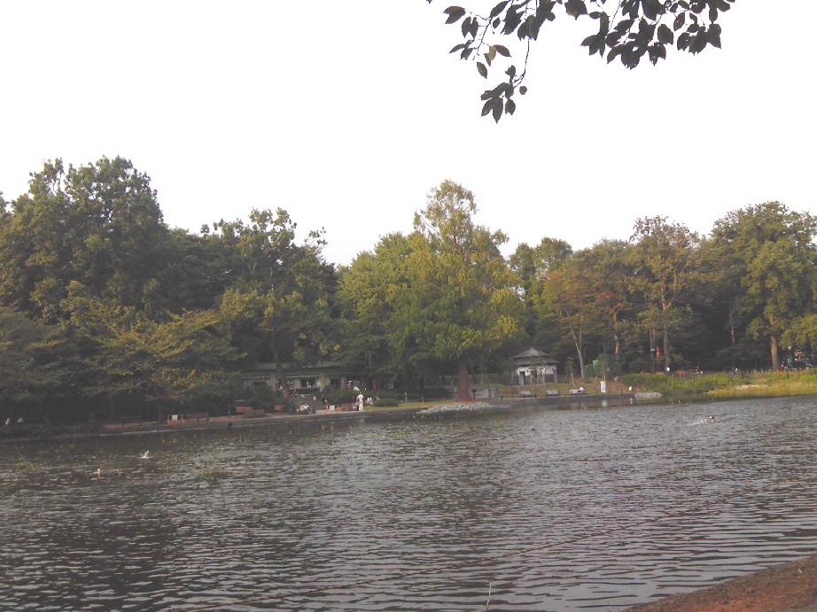 大宮公園2011_09