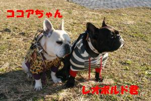 レオくん&ココちゃん