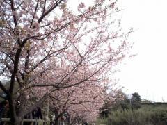 kawatsu009