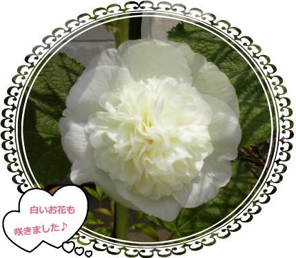 花ブ76-7