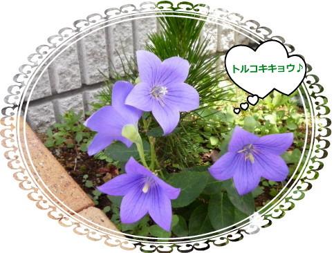 花ブ714-6