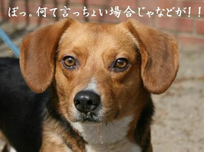 00k-san-satuma-12.jpg
