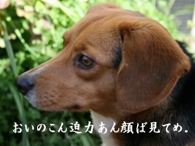 0k-san-satuma-9-5.jpg