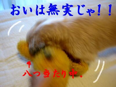 20071122190321.jpg