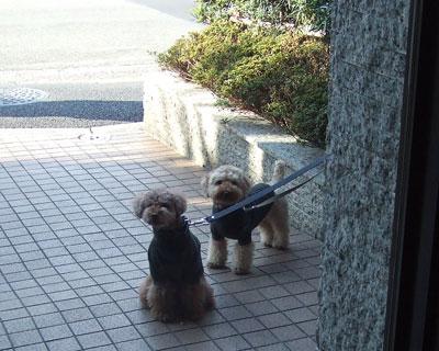 小川軒の前で待つ2ワン