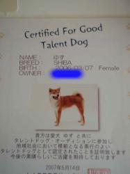 タレント犬