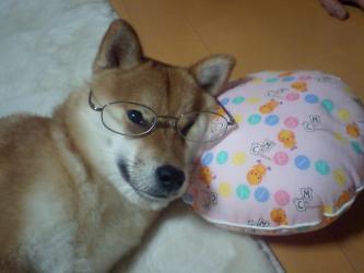 メガネゆず