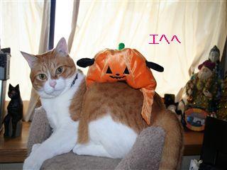ダンゴかぼちゃ2