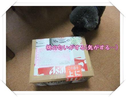 001_20110323194216.jpg