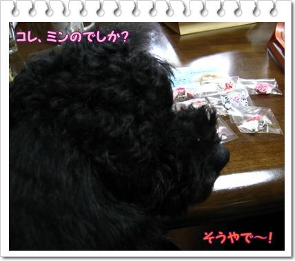 005_20110203224329.jpg