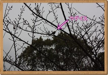 100_20110308192403.jpg