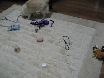 おもちゃだらけ