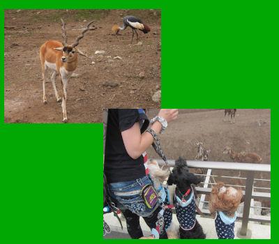 2011.7.2動物1